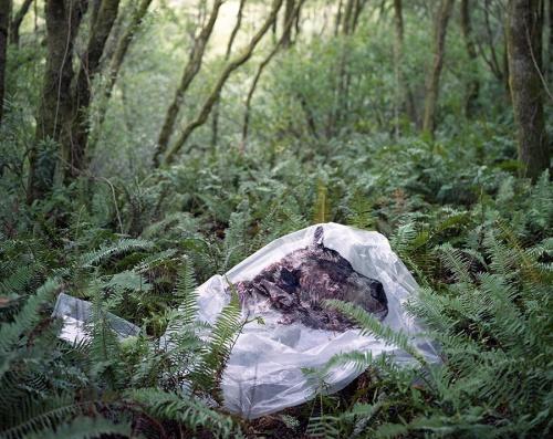 Alicia Escott, Bear Relocation Project